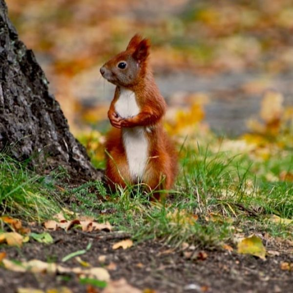 a-squirrel-next-door-1350852